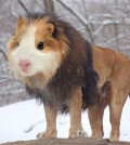 Photoshopped Animal Hybrids that may live in yo...