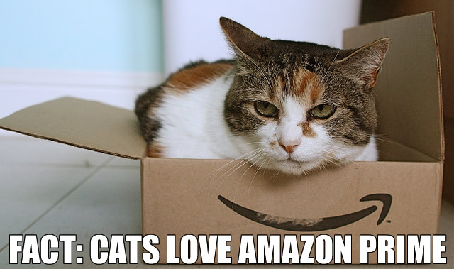 cat-amazon box
