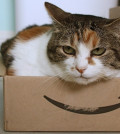 Amazon box with cat inside
