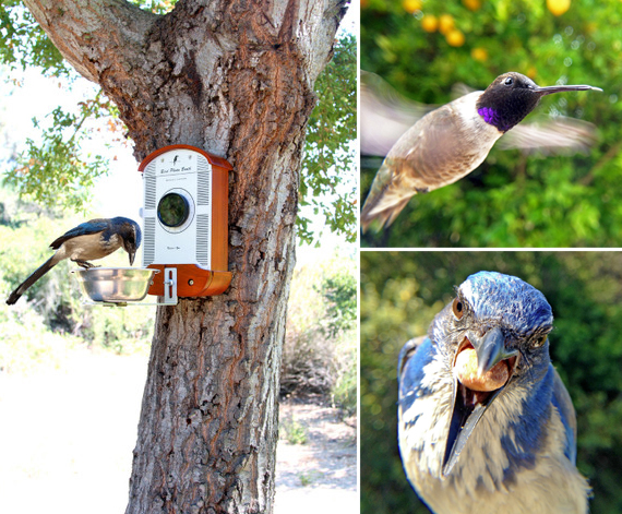 Bird Photo Booth 2.0