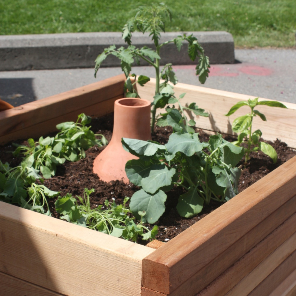 GrowOya Irrigation Pot